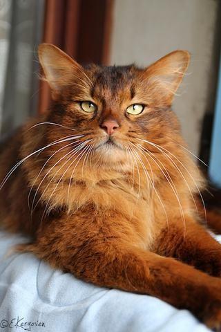 somali chat fyldige damer